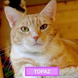 Topaz - Sitting Pretty - 2017