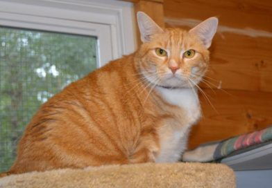 Topaz – Cat of the Month