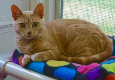 Shiney-January Cat of the Month
