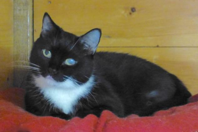 Alana-October Cat of the Month