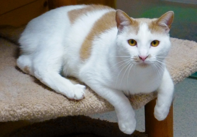 Gabby – December Cat of the Month