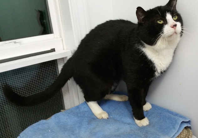 Tux – Adopt or $75/Mo to Foster
