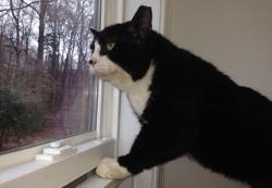 Tux Watching Birds - Dec 2016
