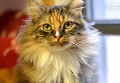 Sun City Sista Kitty – Cat of the Month