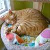 Streamer Sleeping