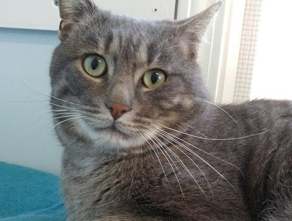 Jeffrey – Cat of the Month