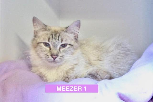 Meezer 1 is Beautiful - June 2017