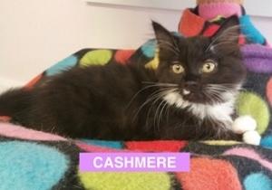 Cashmere posing - Aug 2017