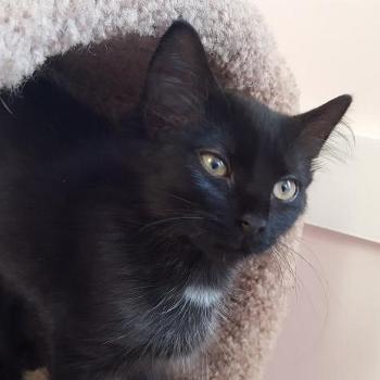 Devon in the cat tree - Aug 2017
