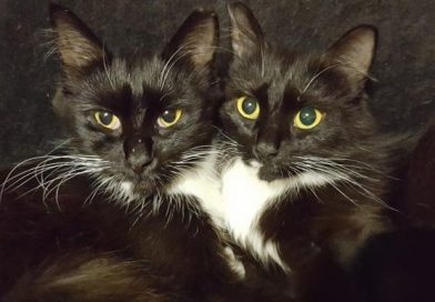 Twin Kitty & Mrs. Kitty – Cats of the Month