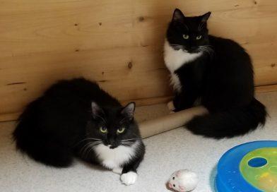Mrs. Kitty & Twin Kitty - Sept 2017