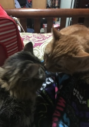 GIRLFRIEND & BOYFRIEND KISS 2017