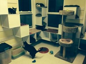 FURR Grant5-Happy Healthy Kitties in New Lodge
