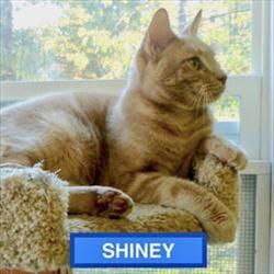 Shiney - Handsome Pose