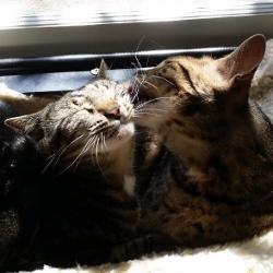 Cassie & Duncan - Oct 2016