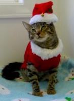 Arbie's Christmas Card Photo
