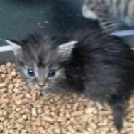 Itty Bitty Rescued
