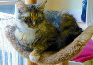 Sun City Sista Kitty