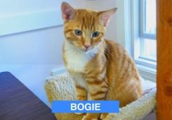 Bogie Posing - Oct 2016