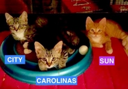 City, Carolinas and Sun Babies - Summer 2016