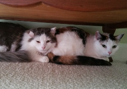 Potter & Sweetie Pie Cuddled Up in New Home - Sept 2016