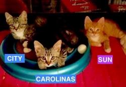 City, Carolinas and Sun as Babies - Summer 2016