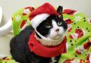 Tux with Santa Hat