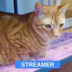 Streamer - Contemplating Cat-of-the-Month