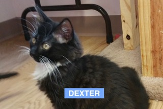 Dexter - Aug 2017