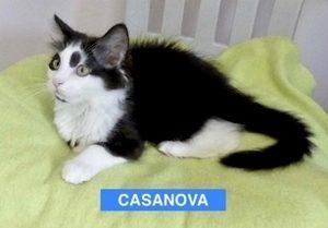 Casanova - Aug 2017