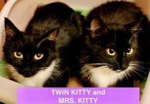 Twin Kitty & Mrs. Kitty