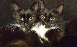 Twin Kitty & Mrs Kitty
