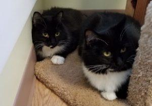 Twin Kitty & Mrs. Kitty - Nov 2017