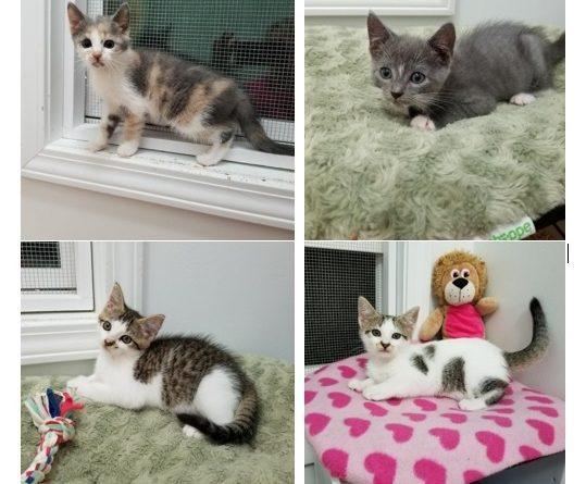 Four Kittens - Nov 2017