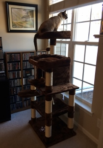 Ellis in cat tree in new home - Feb 2018
