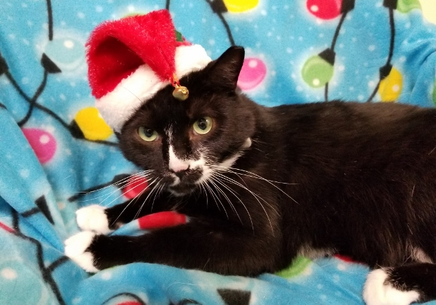 DOMINO in Santa Hat