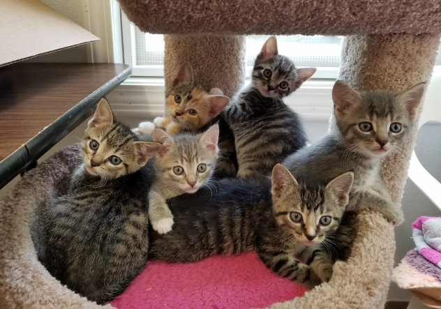 Suzanna's Kittens - April 2018