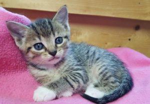 Suzanna's Kittens-3