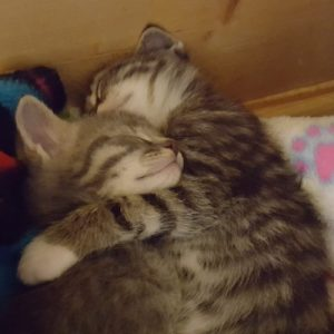 Suzanna's kittens-early 2018