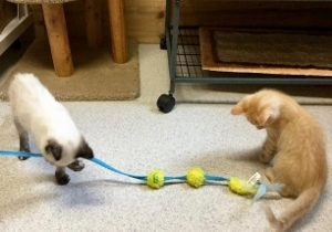 Gretel and Hansel playing