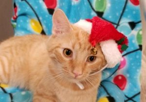 Hansel in Santa Hat