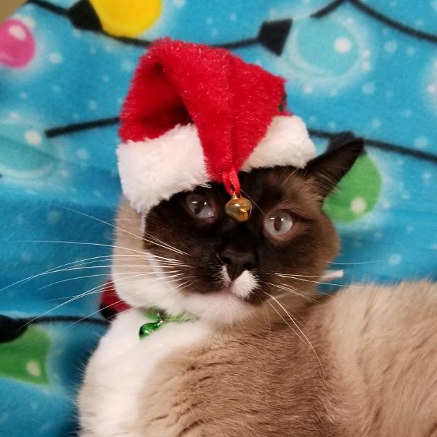 AVERY KITTY in Santa Hat