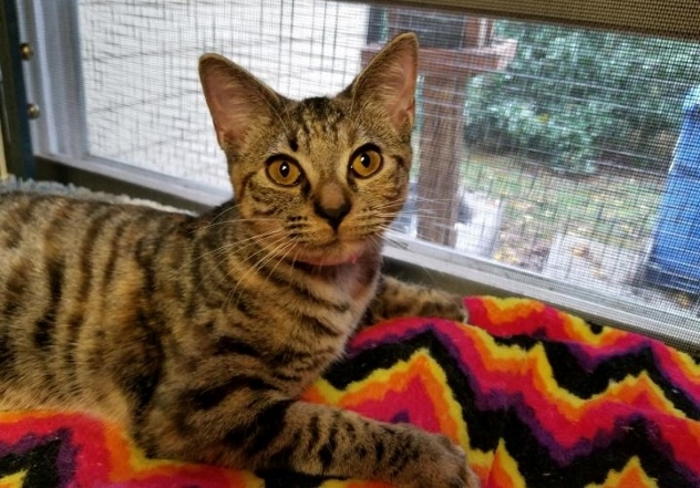 June is Adopted!