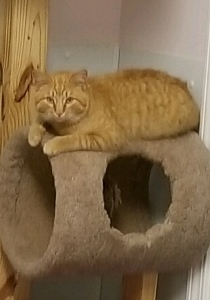 Hayden on cat tree - April 2019