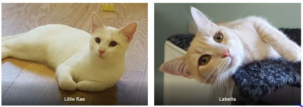 Adopt Lillie Rae & Labella Today!