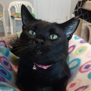 Inky Kitty from Hampstead Colony - July 2020