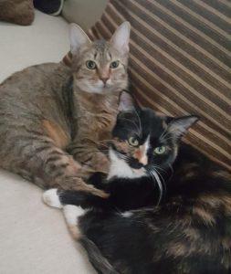 Amelia & Caddie - Best Feline Friends